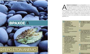 Βράχος ή φτερό στον άνεμο; | vita.gr