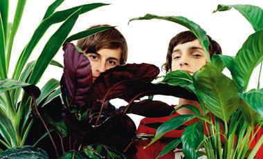 Φυτά εσωτερικού χώρου. «Φίλτρα» για τον αέρα του σπιτιού | vita.gr