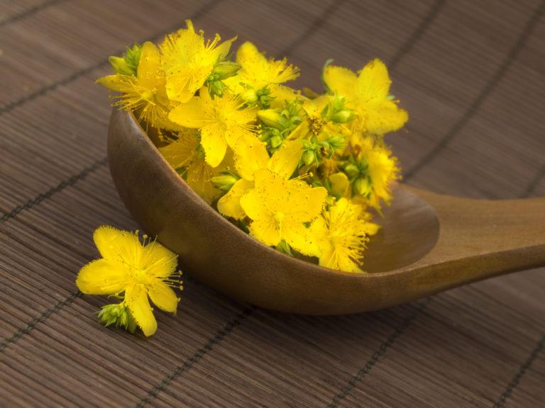 Tα top 10 βότανα του κόσμου | vita.gr