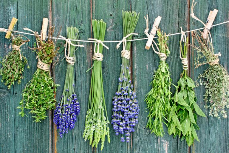 Τα βότανα της ευτυχίας | vita.gr