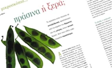 Τα φασόλια – Πράσινα ή ξερά;   vita.gr