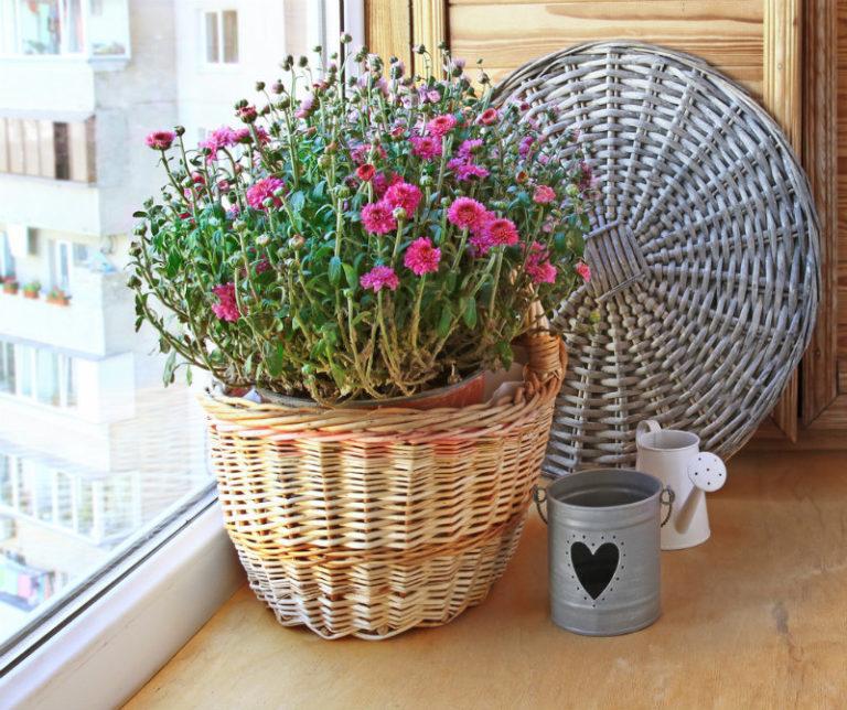 Τα φυτά που «καθαρίζουν» το σπίτι σας | vita.gr