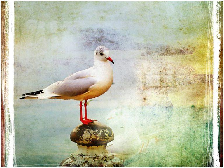 Ευρωπαϊκή Γιορτή των Πουλιών 2013 | vita.gr