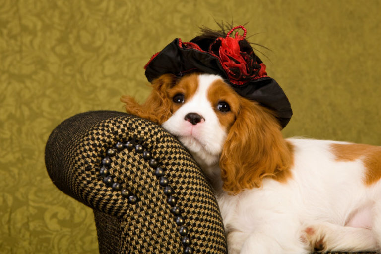 Ο σκύλος «μαρτυρά» την κατάσταση της υγείας μας; | vita.gr