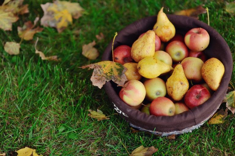 Γλυκά με μήλα και αχλάδια | vita.gr