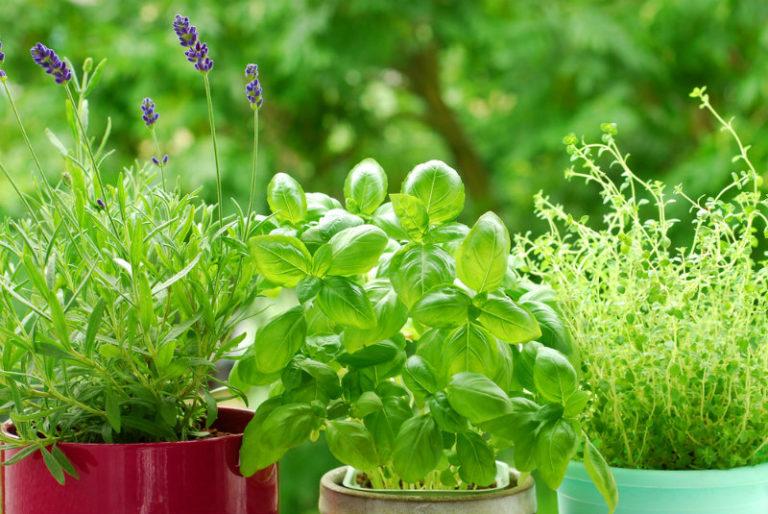 Ελληνικά βότανα, μοναδικά φάρμακα | vita.gr