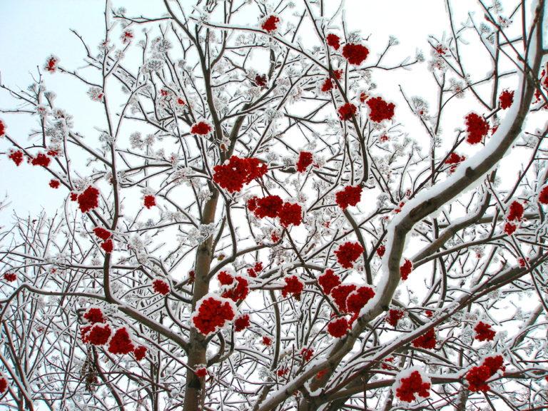 Ο χειμωνιάτικος κήπος | vita.gr