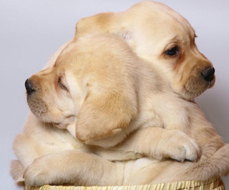 Αντιμετωπίστε το άσθμα με ένα σκύλο | vita.gr
