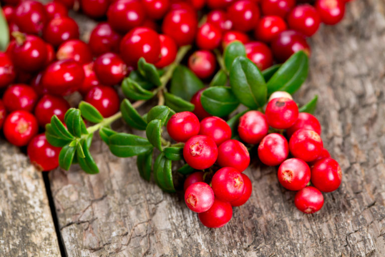 Τα κόκκινα μούρα που νικούν το λίπος | vita.gr