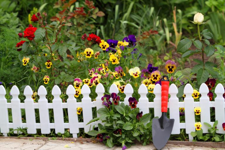 Φτιάχνοντας έναν φράχτη με φυτά!   vita.gr