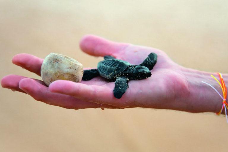 Γνωρίστε τις θαλάσσιες χελώνες | vita.gr