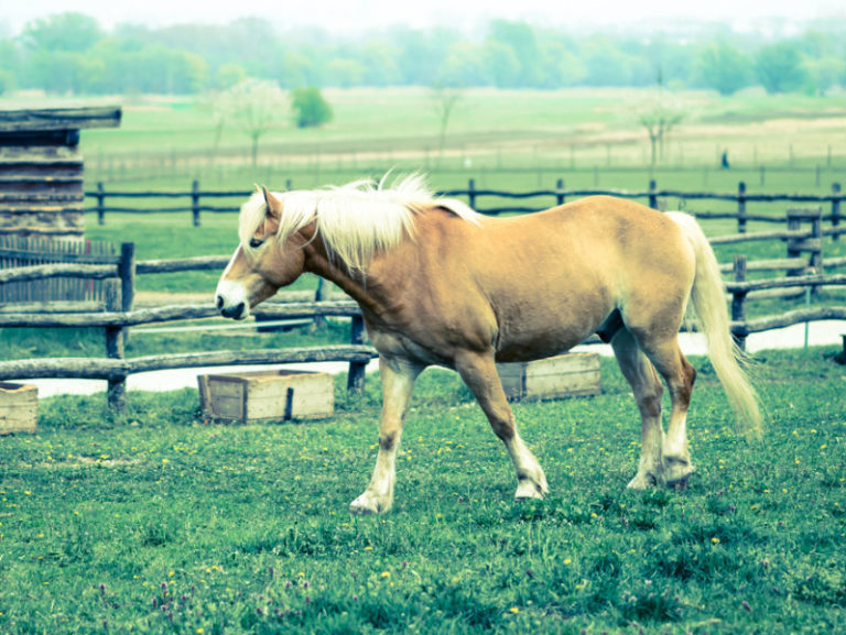Τα άλογα ρίχνουν το στρες | vita.gr