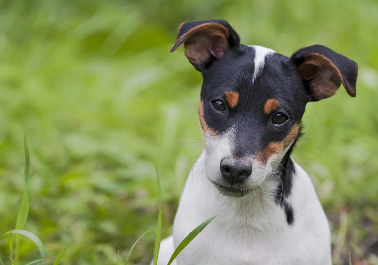 Καρκίνος του προστάτη: οι σκύλοι τον ανιχνεύουν καλύτερα | vita.gr