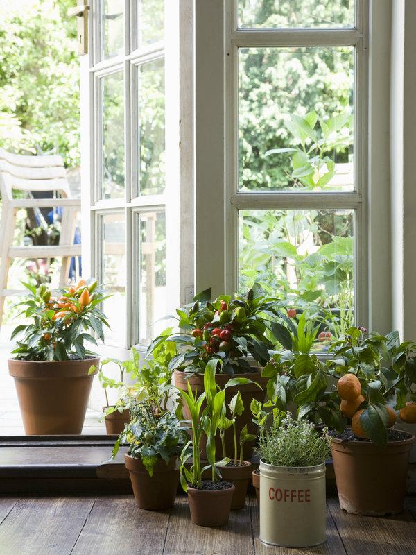 Πώς να διώξω τα έντομα από τα φυτά μου; | vita.gr