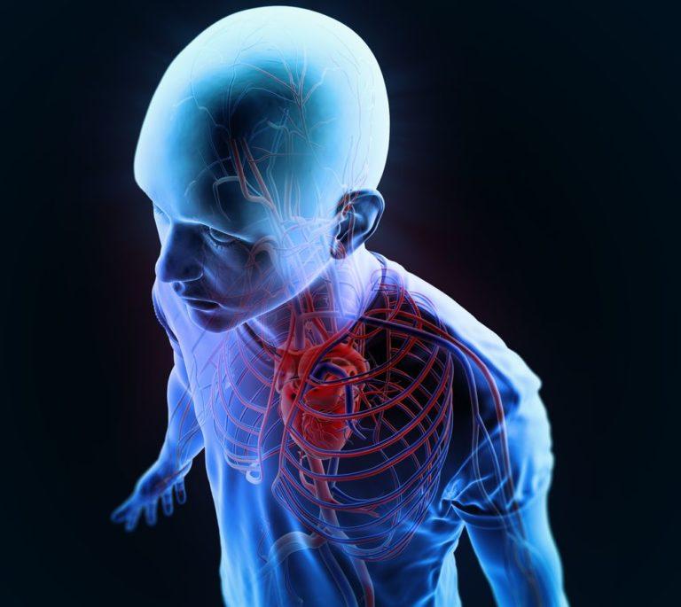 Όργανα προς μεταμόσχευση επί παραγγελία | vita.gr