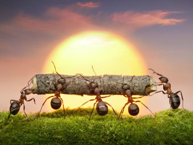 Έρχονται αντιβιοτικά από μυρμήγκια; | vita.gr
