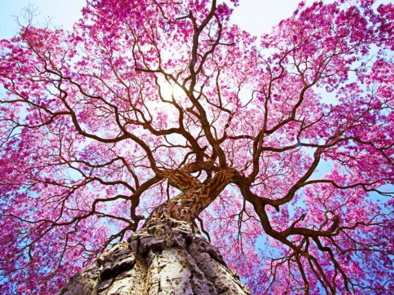 Τα δέντρα σώζουν ζωές | vita.gr