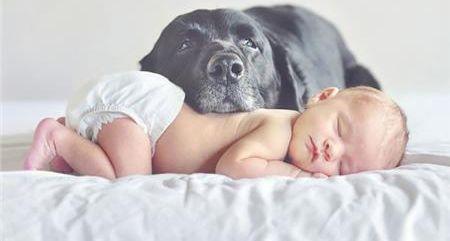Σκυλιά VS μωρά: Μια υπέροχη σχέση | vita.gr
