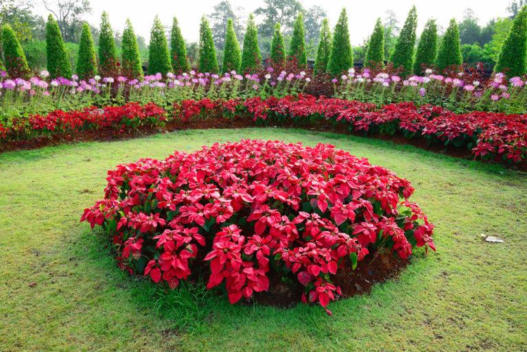 Φυτά και λουλούδια με άρωμα Χριστουγέννων | vita.gr