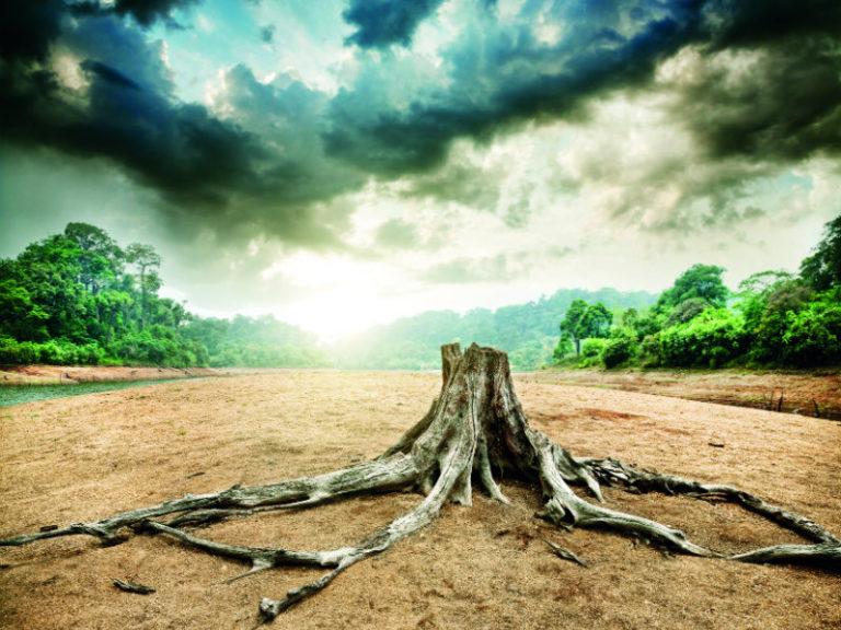 Μήπως «τρώμε» τα δάση; | vita.gr