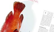 Ποιά ψάρια δεν είναι μολυσμένα; | vita.gr