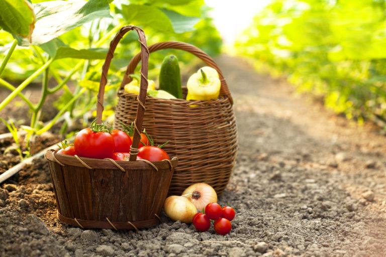 Ετοιμάστε τον καλοκαιρινό σας λαχανόκηπο | vita.gr