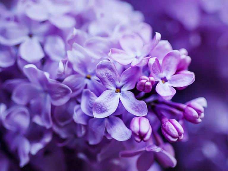 Λουλούδια πασχαλιάς για τους ρευματισμούς | vita.gr