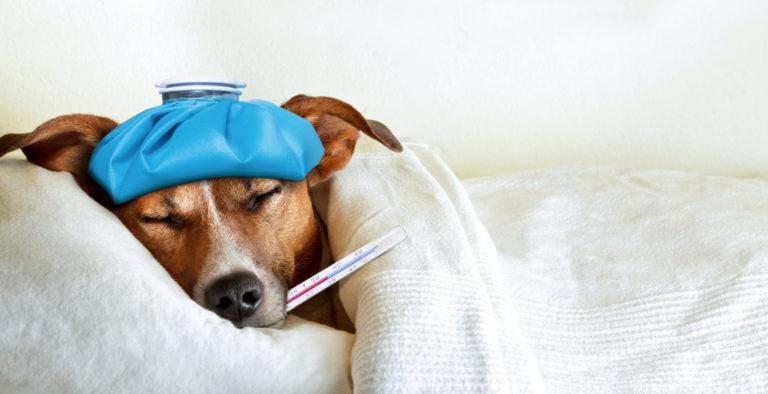 Πυρετός: «Ρίξτε» τον εναλλακτικά | vita.gr