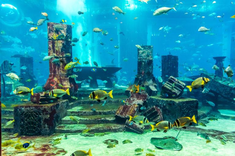 Ενυδρείο: υποβρύχιο ηρεμιστικό | vita.gr