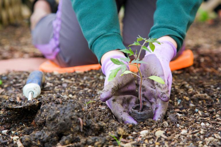 Καλλιεργήστε για το καλό σας! | vita.gr