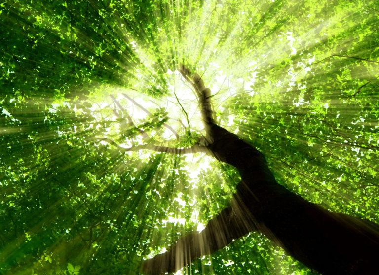 Το πράσινο μας κάνει ευτυχισμένους | vita.gr