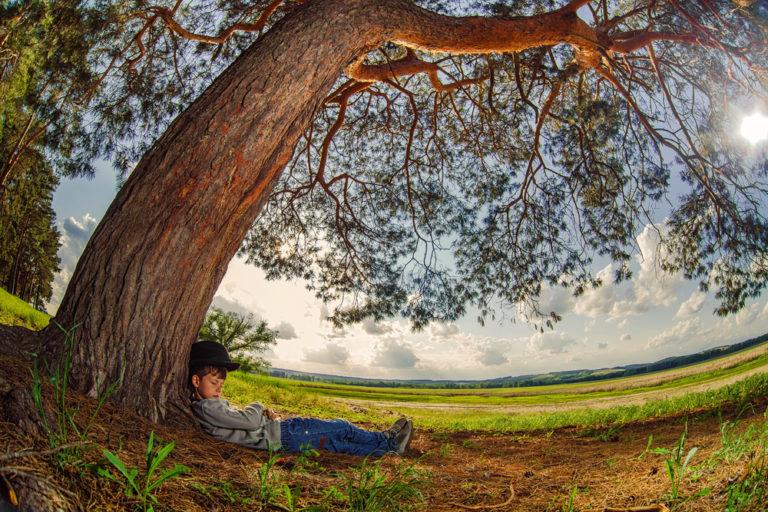 Κοιμούνται τα δέντρα; | vita.gr