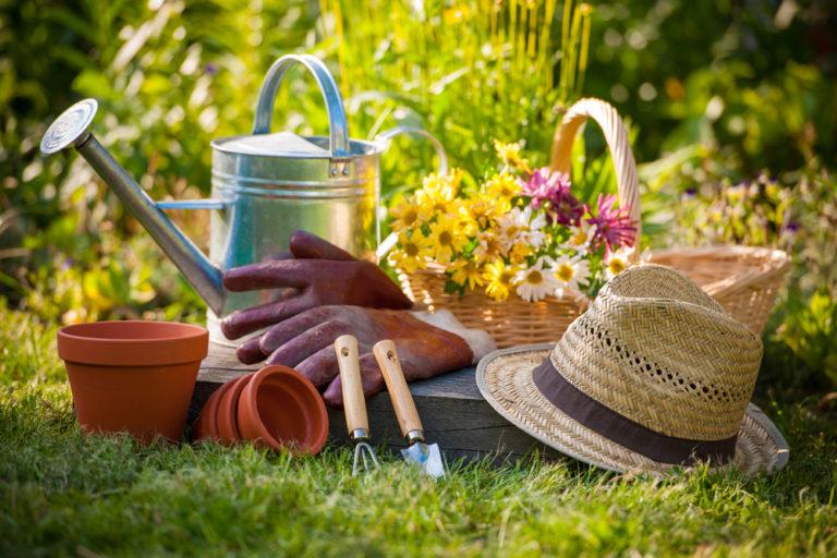 Θα λείψω το καλοκαίρι, τι να κάνω για να μη μαραθούν τα φυτά μου; | vita.gr