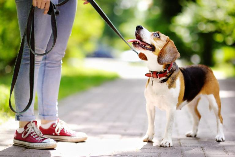 Σκύλος…  ο καλύτερος προπονητής του ανθρώπου | vita.gr