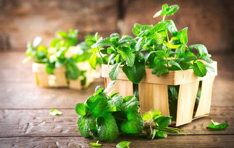 Δυόσμος: Το ευεργετικό μυρωδικό της μαγειρικής | vita.gr