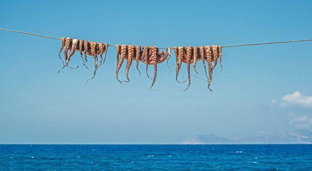 Χταπόδι: Και θρεπτικό και με χαμηλή χοληστερίνη | vita.gr
