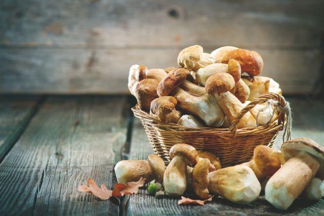 Μανιτάρια, πολύτιμη και διαιτητική τροφή | vita.gr
