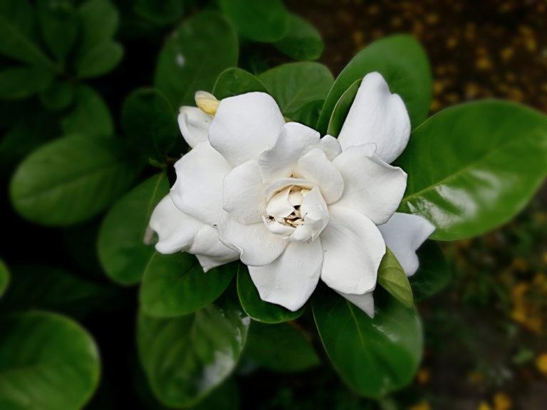 Λουλούδια: Οι παραξενιές των οξύφιλων | vita.gr