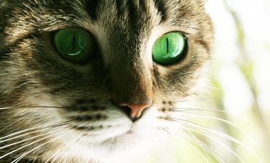 Γονίδια + γάτες = έκζεμα;   vita.gr
