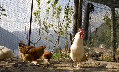 «Όχι» στα κοτόπουλα με αντιβιοτικά   vita.gr