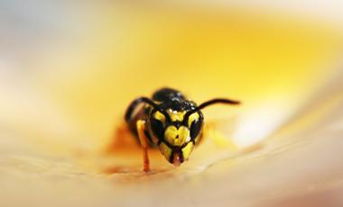 Το δηλητήριο που προστατεύει | vita.gr