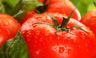 Εμβόλιο ντομάτας κατά Αλτσχάιμερ! | vita.gr