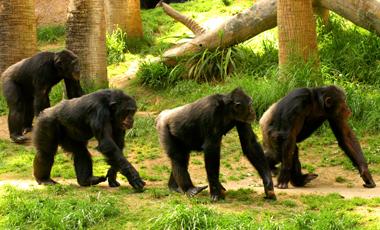 Το «Sex And The City» των χιμπατζήδων! | vita.gr