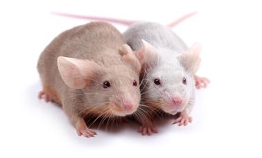 Από τα ποντίκια στα μαμούθ; | vita.gr