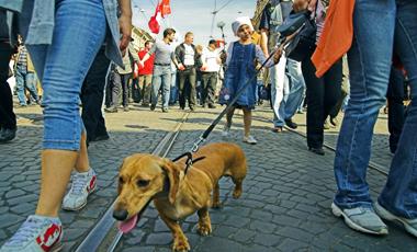 Ευτυχισμένοι οι ακτιβιστές! | vita.gr