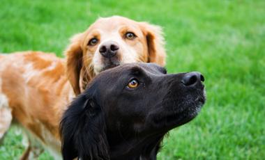 Τι λέει ο σκύλος σας; | vita.gr