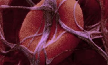 Η μικροσφαίρα που επισκευάζει τα αγγεία   vita.gr