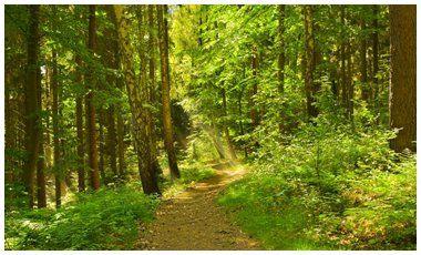 Διεθνής Ημέρα Δασών | vita.gr