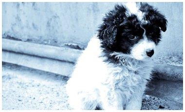 Παγκόσμια Ημέρα Αδέσποτων Ζώων | vita.gr