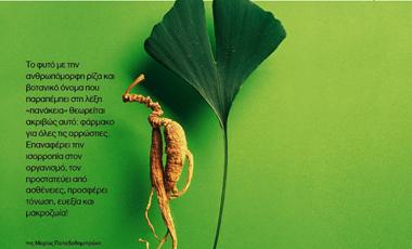 Ginseng, η ρίζα της ζωής! | vita.gr